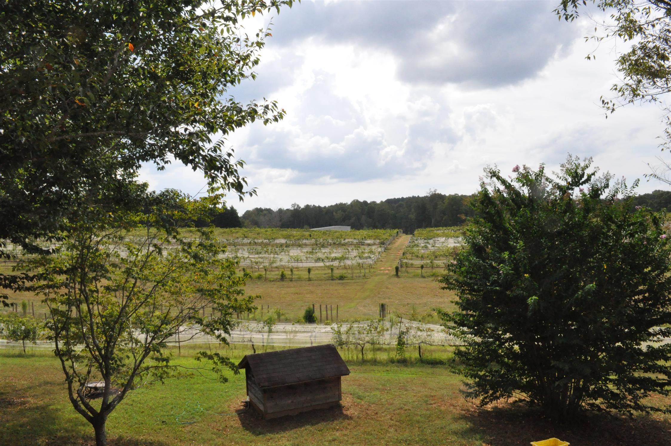 Land for Sale in the NC Mountains and the SC Foothills